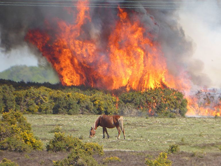 Gorse fire at Sway in April, credit Mac Hall