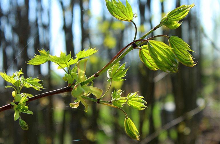 Trees-Ringwood