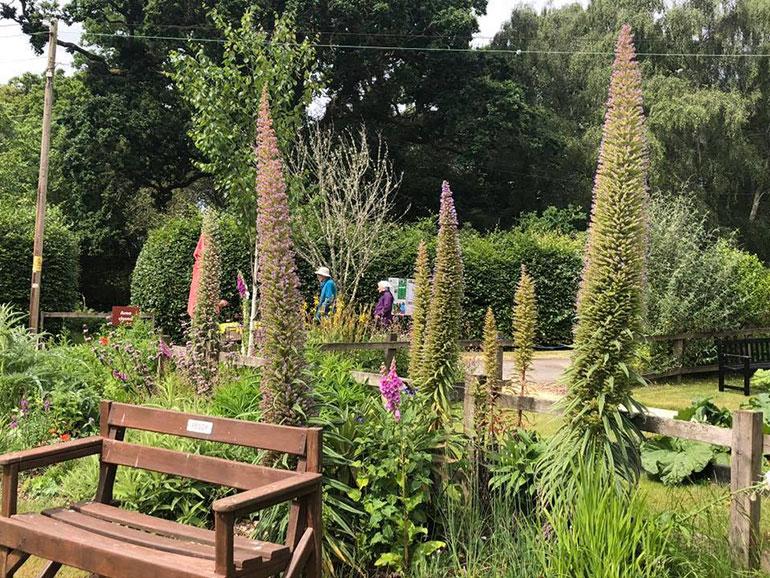 Visitors return to Furzey Gardens