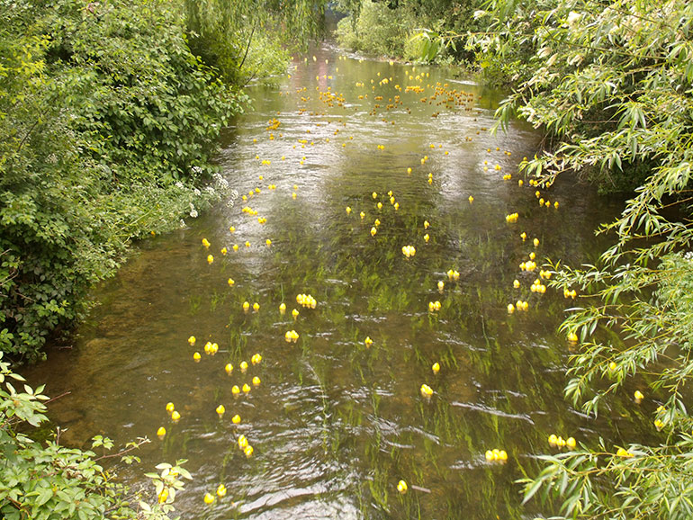 Wimborne duck race: the usual quackophony won't be heard this year