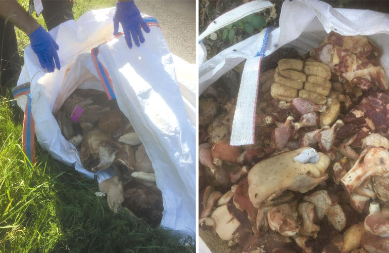 White dumpy bags full of rotting meat have been fly-tipped in Dorset