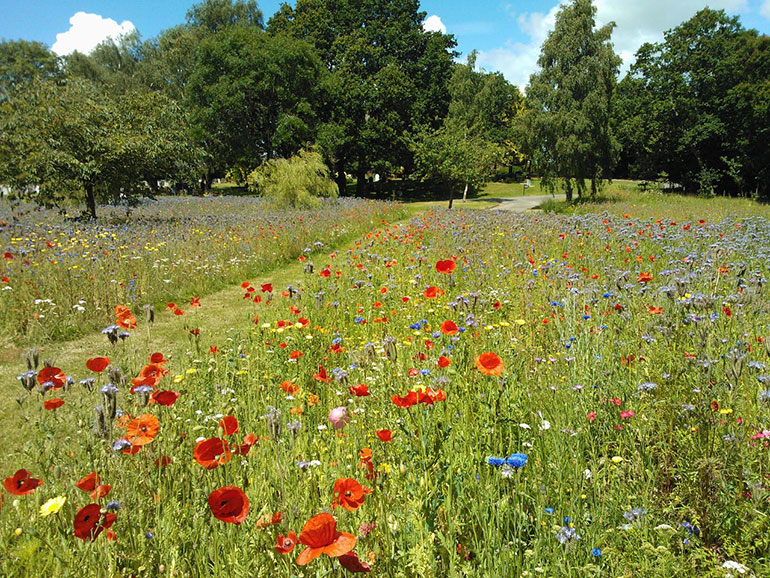 Wildflowers can have a positive impact on our wellbeing