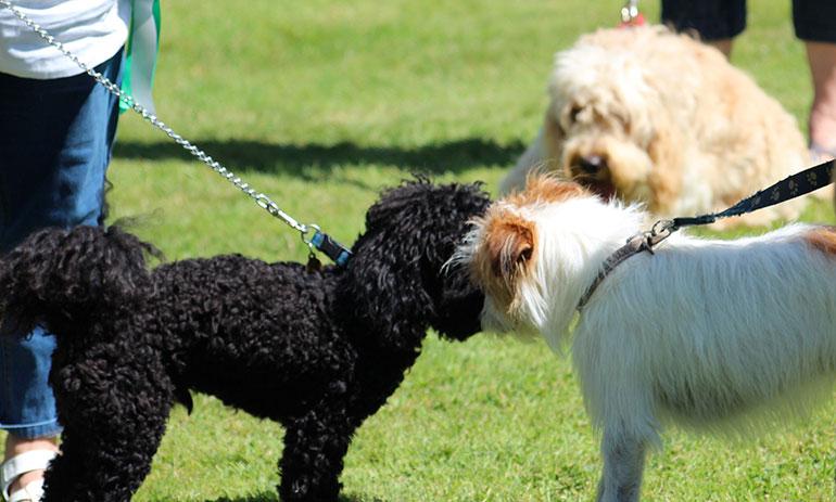 Dogs-PSPO