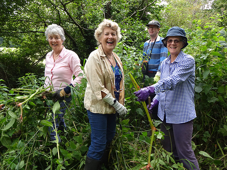 Volunteers Gill Rowlands, Patsy Baverstock, Brian Matthews and Claire Benton pull Himalayan balsam from the east bank of the Avon Water