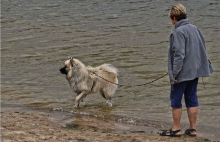 Dog owner on a beach