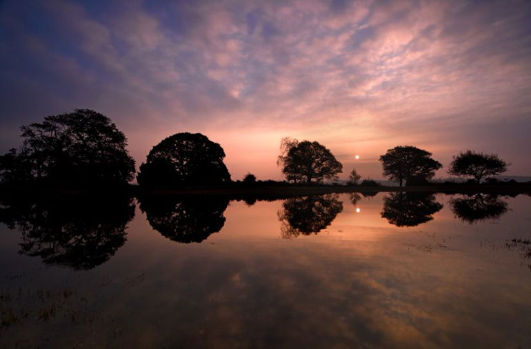 Forest sunrise, photo by Solent News and Photo Agency
