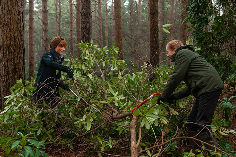 Volunteers help to clear the shrubs