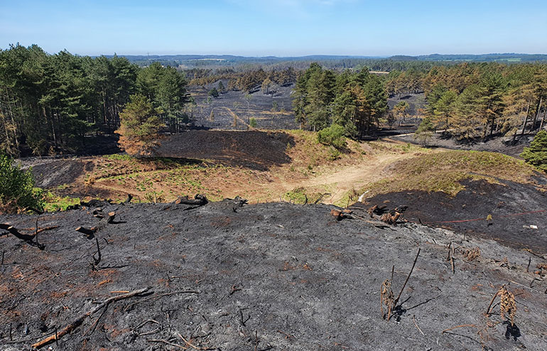 Wareham forest after the fire photo by Dorset CRPE