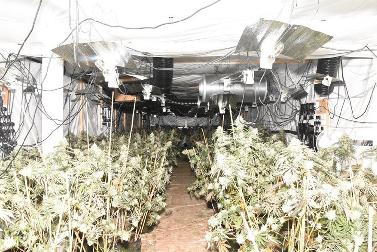 Discovery of large-scale cannabis factory in Wareham