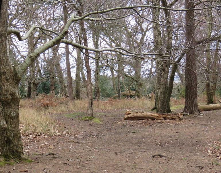 RSPB-Arne-woodland
