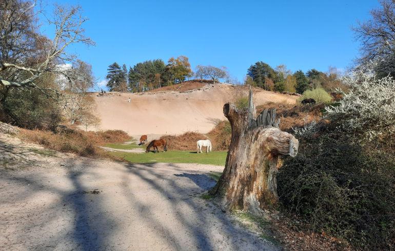 New Forest Rockford Sandpit