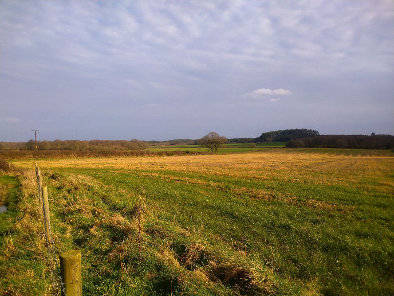 Wilder Dorset - site view 1 © Dorset Wildlife Trust