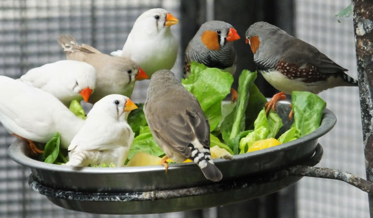 Bournemouth aviary to be rebuilt following successful fundraising effort