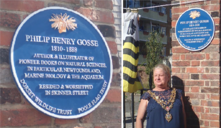 L - Blue plaque fixed in Skinner Street to commemorate author Philip Henry Gosse and r - Mayor of Poole at the blue plaque commemorating Philip Henry Gosse